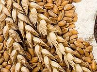 Dieta pszenna oczyszczająca organizm z toksyn